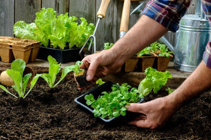 Berkebun Kebaikan